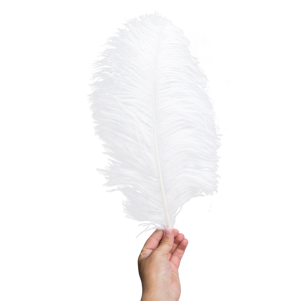 Plym  stor vit